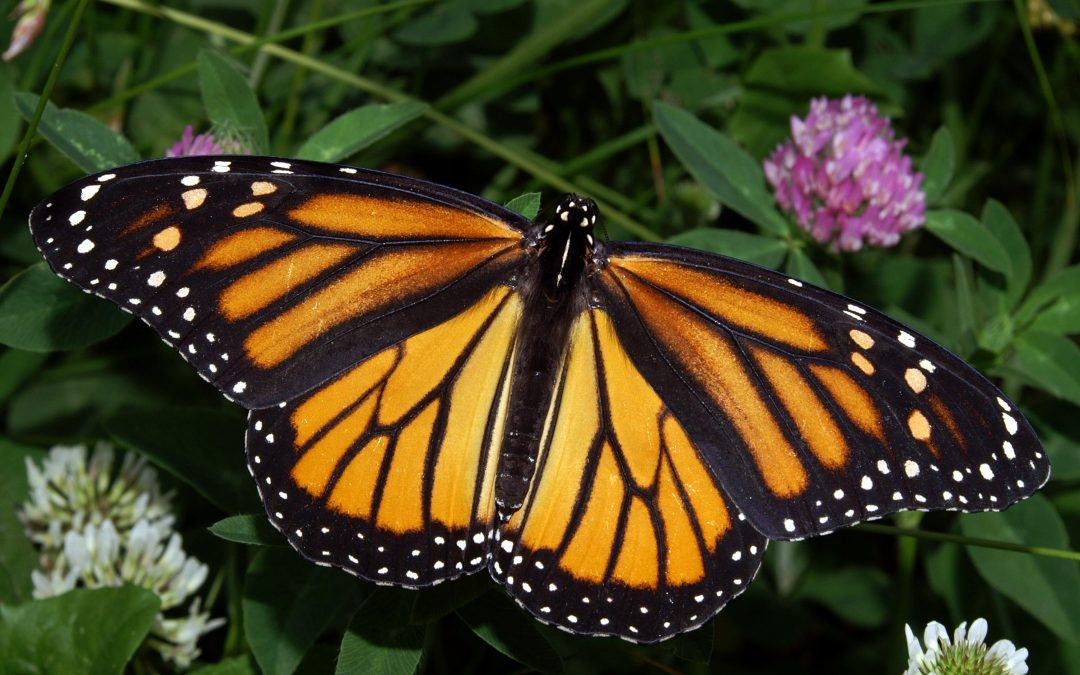 When We Protect Organic Farmers We Protect Our Monarch Friends