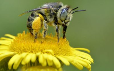 European Union Bans Neonicotinoid Insecticide, Citing Health and Environmental Concerns