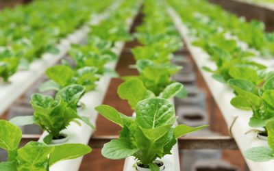 Organic food producers, certifiers sue USDA over hydroponics