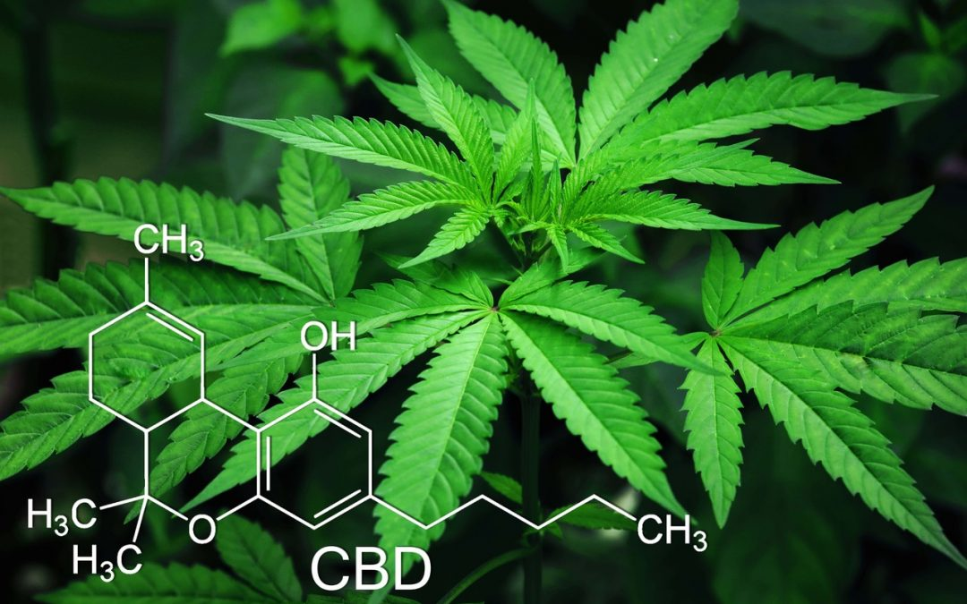 "Case Study: CBD Products And The ""Wild West"" Of Fraudulent Labels"